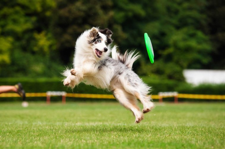 How to Teach a Dog to Fetch a Ball