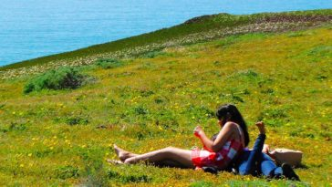 3 Ways to Have An Eco-Friendly Picnic