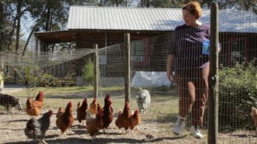 Building a chicken coop will help you raise healthy chickens, here is why.