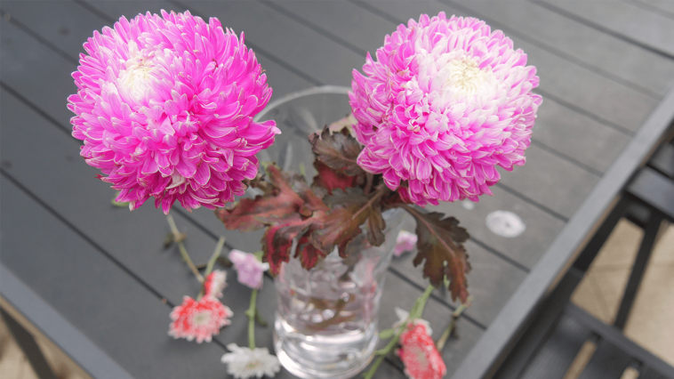 These Are Things That Will Guide You in Choosing Best Edible Flowers from Flower Shop Vancouver.